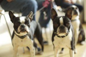 Hunde Tierarzt Göbel