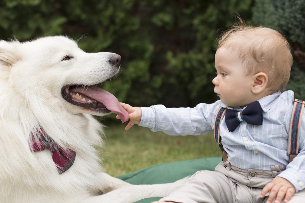 Zahnhygiene bei Hunden