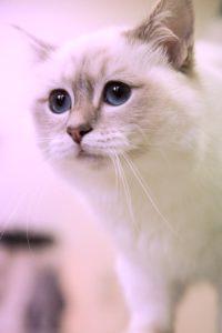 Katze Hausbesuch