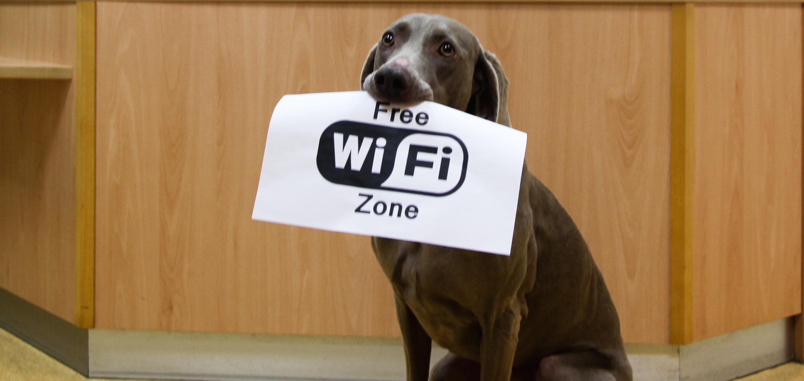 Wifi Tierarzt