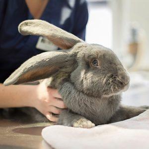 Ein Riese als Patient beim Tierarzt