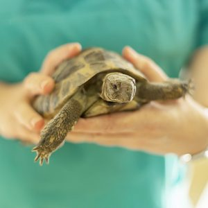 Überwinterung Schildkröte Praxis Göbel